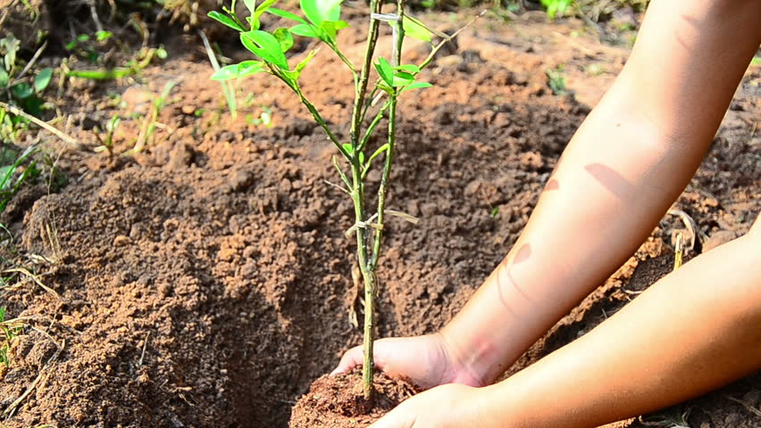 Plant,Tree,Male hand planting young tree