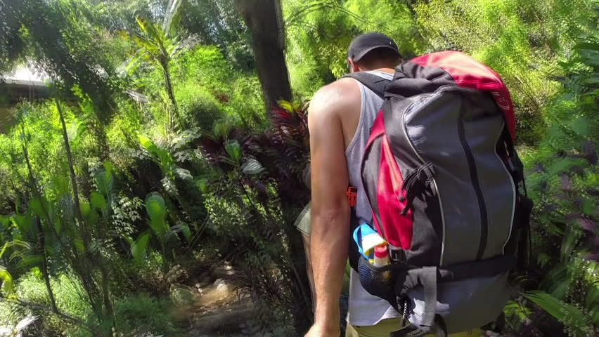 Young Hikers walking in rain forest jungle. Hiking couple trekking through dense rainforest nature. Active lifestyle.