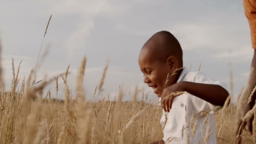 A father and son play in a wheat field on a sunny day. - HD stock footage clip