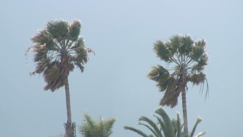 Windy palms | Shutterstock HD Video #82798