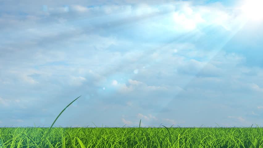 Beautiful broadleaf tree growing on green grass field under bright sun - HD stock video clip