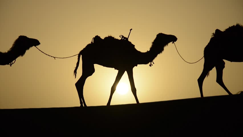 Silhouettes of a berber man and a row of his caravan of camels walking on top of a sand dune during the sunset with the sun shining in the horizon in the Sahara Desert in Morocco in the spring.