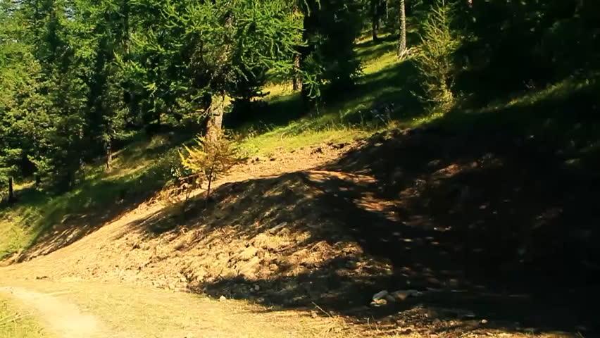 A mountain biker performs a jump while riding down a dirt trail - HD stock video clip