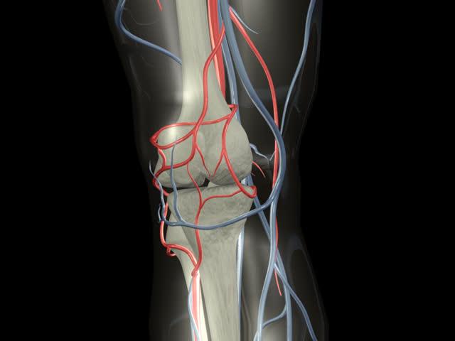 Knee Rotation PAL