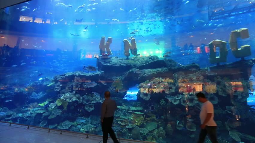 Dubai dec 29 2014 crowd watching dubai mall aquarium at for Aquarium angle