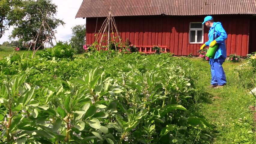 Gardener Man Sprays Chemical Fertilize Potato And Bean