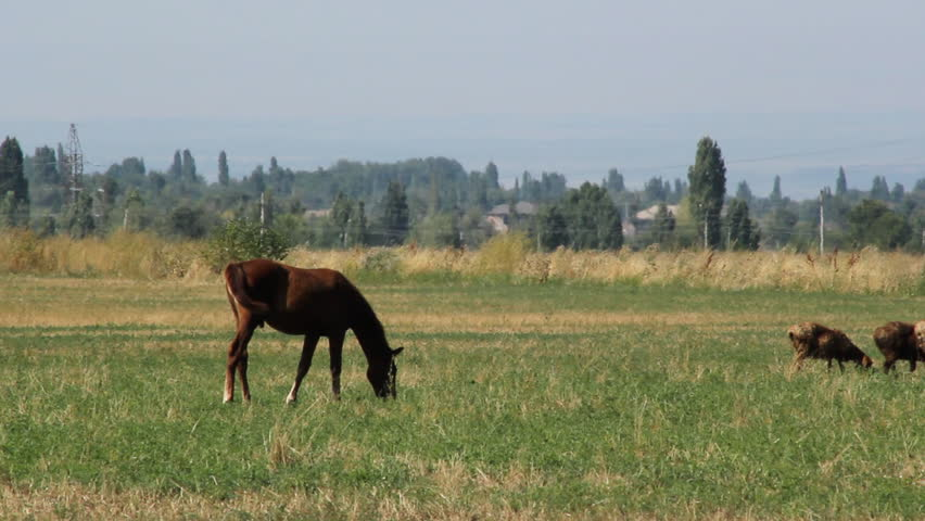 Horses are grazed on a pasture. - HD stock video clip