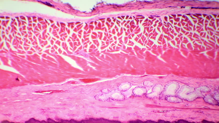 Epithelium Footage #page 2 | Stock Clips