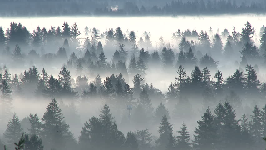 Morning fog moving through hidden Portland, Oregon neighborhood trees with sunlight brightening to intense white.