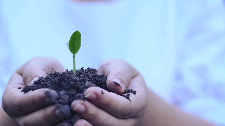 Seeding,Seedling,Female hand planting in slow motion