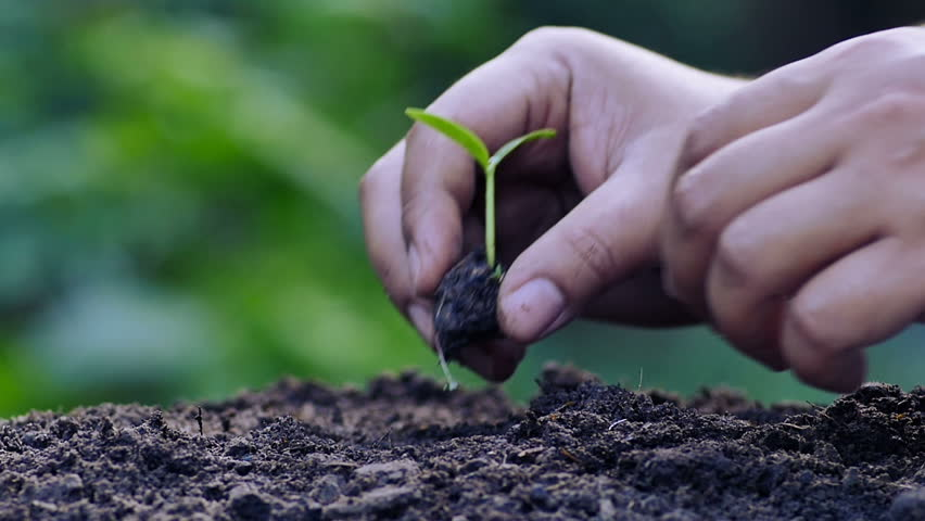 Agriculture,Seeding,Seedling,Plantation,Male hand planting in slow motion shot