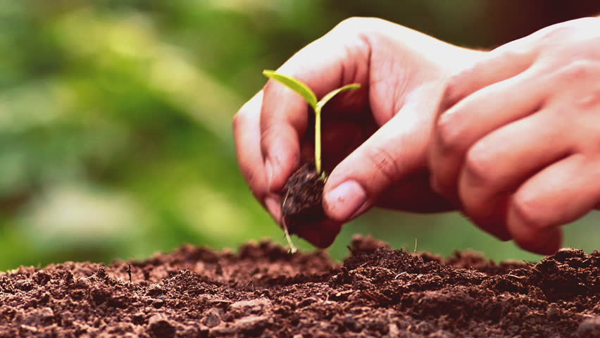 Planting, Seeding, Seedling, Close up Male hand planting young tree over green background Vintage Style , Slow motion