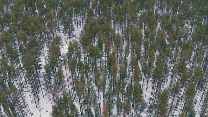 Flying Above Winter Forest in Cloudy Weather, aerial view - HD stock footage clip