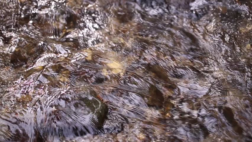 Close-up of countryside spring forest water stream. - HD stock video clip