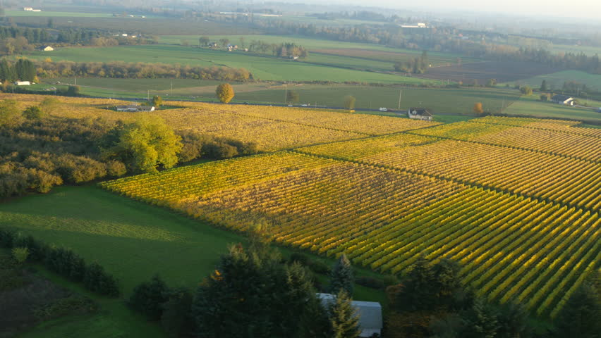 Aerial video of Willamette Valley, Oregon vineyards in fall color: 4K Ultra HD