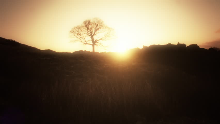 Beautiful solitary Tree silhouette HD stock footage. A solitary Tree in silhouette from the Low rising morning sun casting an orange glow in the sky. ProRes 422.
