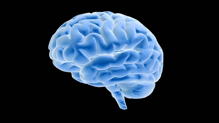 Animated human brain - photo#1