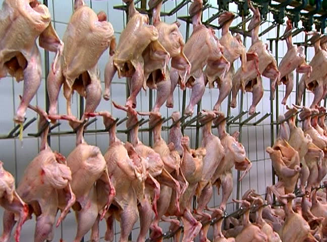 Raw skinned chickens hanging from hooks.