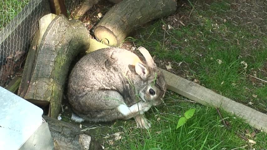 bunny rabbit sniffing around - photo #26